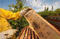 Convocatoria para apicultores