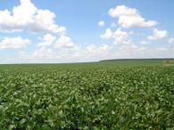 El precio de los campos ya tocó un piso