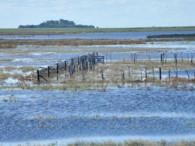 Los excesos de agua afectan la siembra de trigo