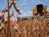 Soja: prevén llegar a 65 M de toneladas en 2020