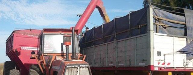 Se derrumbaron 33% las exportaciones de granos