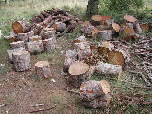 Polémica en Ramallo: Denuncian que empresa tala bosques para instalar emprendimiento turístico