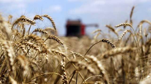 Temen más suspensiones y despidos por las trabas para exportar harina de trigo