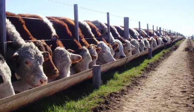 Las exportaciones de carne bovina crecieron 69,7%