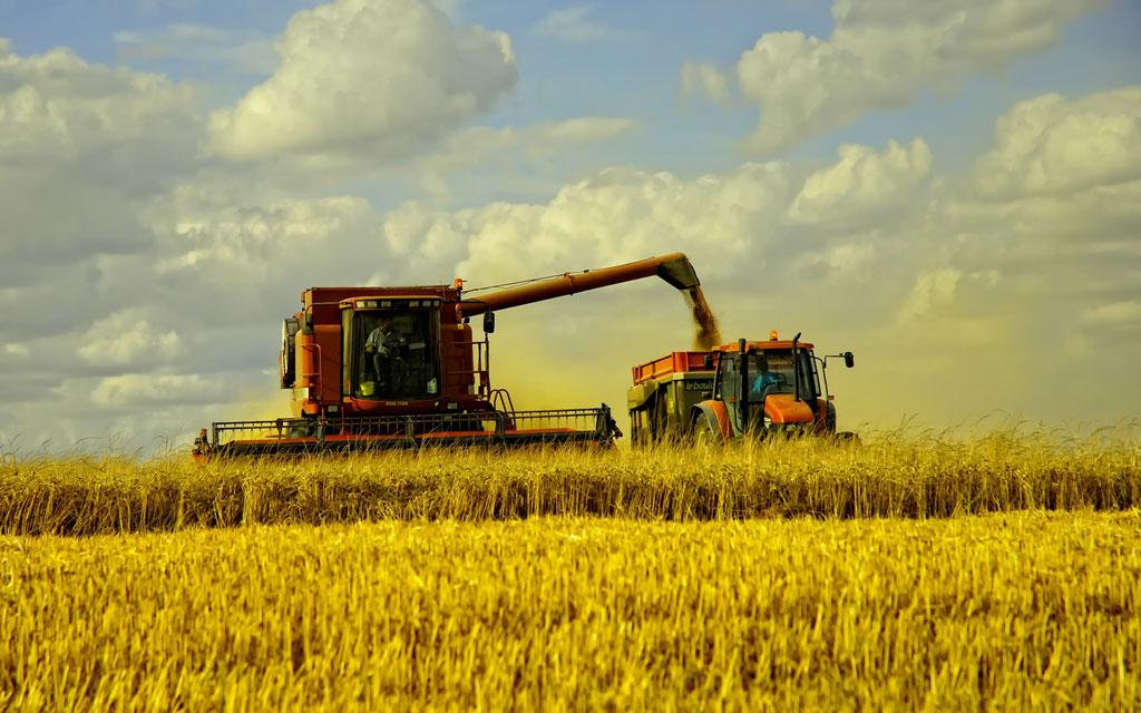 EEUU incrementó en más de 900% sus compras de granos argentinos