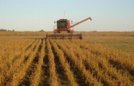 Por la gran cantidad de soja en silo habrá precios bajos el resto del año