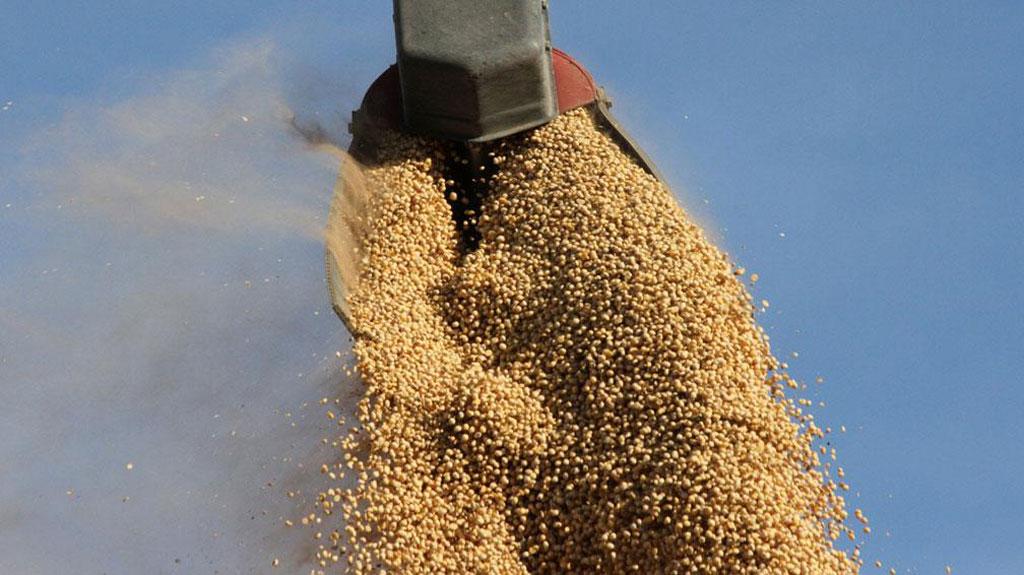 Cayó 21% la molienda de soja