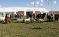 El Senasa hará los controles sanitarios para el ingreso de animales en AgroActiva