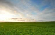 La deficiencia de micronutrientes en el suelo impacta en los rindes