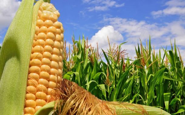 Provincia: la cosecha de maíz mantiene los rindes esperados
