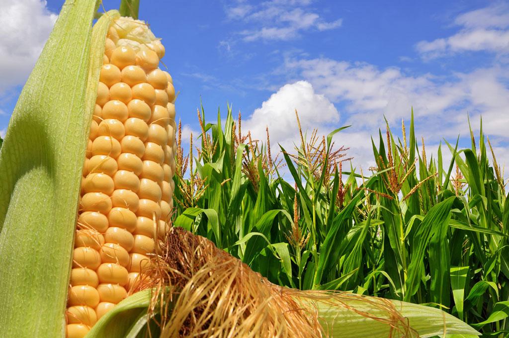 Bajas generalizadas en los granos