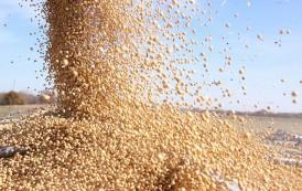 Retomó fluidez la cosecha de soja