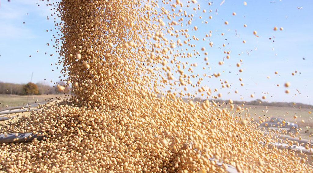 Desmienten que el campo retenga ventas de soja