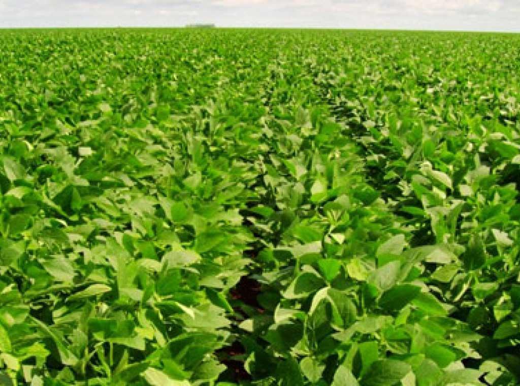Necesidades de la industria y el dólar llevaron a la soja por 1ra vez arriba de $ 5000