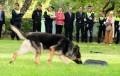 Piden que la policia de todas las comunas tengan una unidad canina