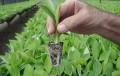 """""""Sin biotecnología, la agricultura no tiene futuro"""""""