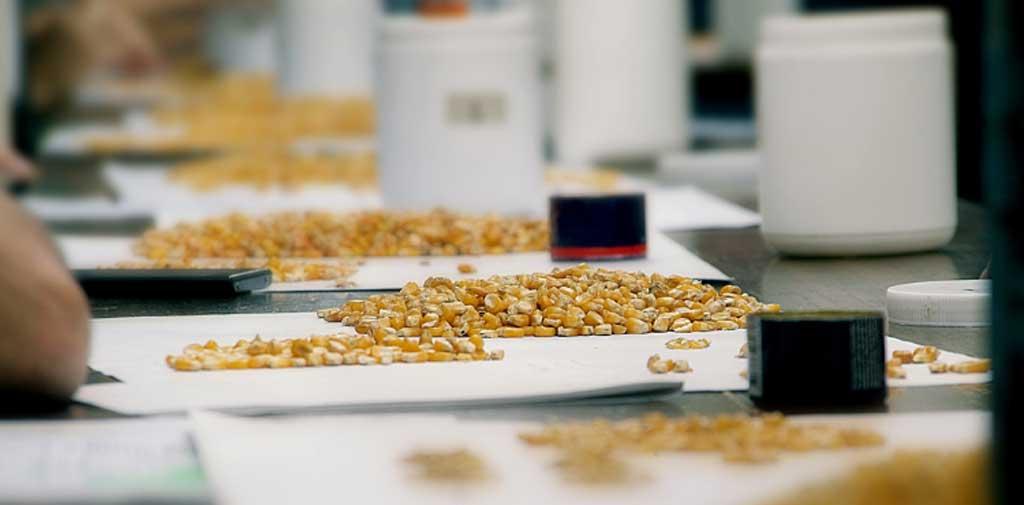 Recibidores de granos realizan paro de 48 horas y mantienen
