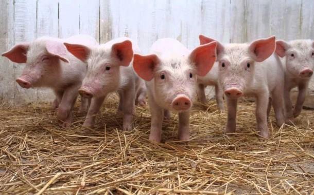 Se debate en Diputados la crisis de los porcinocultores