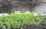 Crean una novedosa plataforma para mejorar la producción de cultivos bajo cubierta