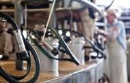 Convocan a pymes lácteas a presentar propuestas para mejorar su desarrollo