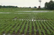 Diputados analizan propuestas para el sector agropecuario