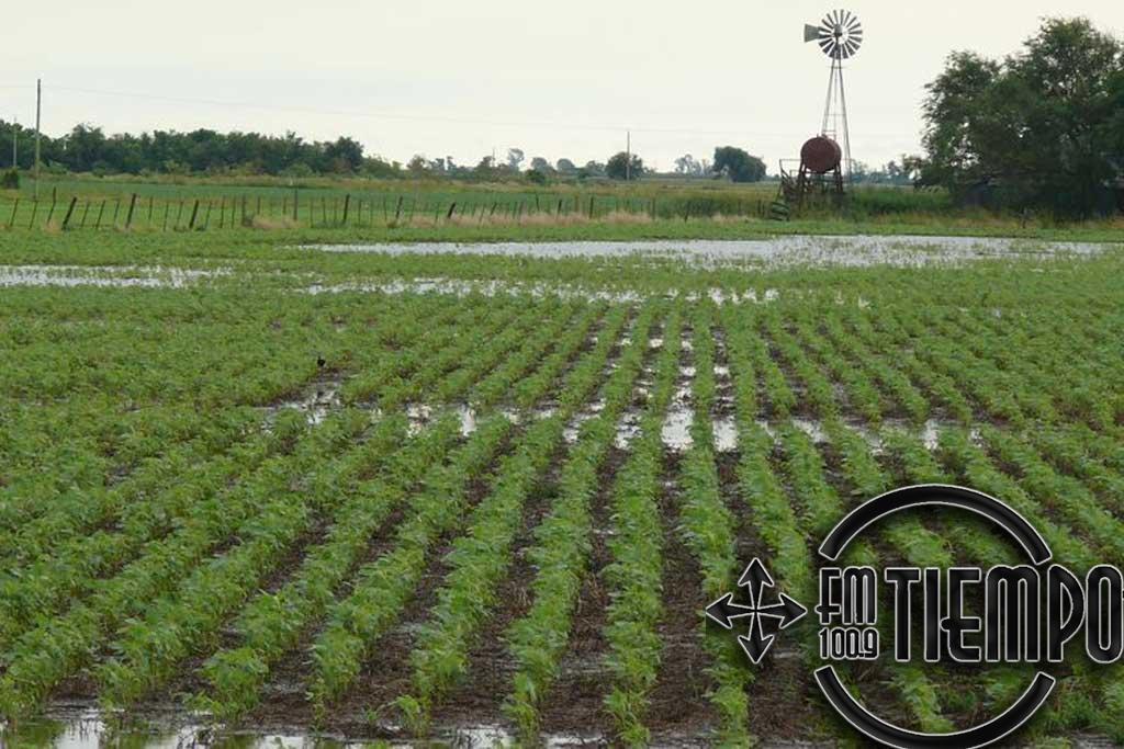 Los excesos hídricos comprometen nuevas zonas sojeras