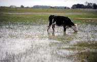 Emergencia agropecuaria por sequía e inundaciones para 21 municipios