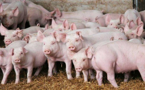 Capacitación en manejo integral de criadero de cerdo