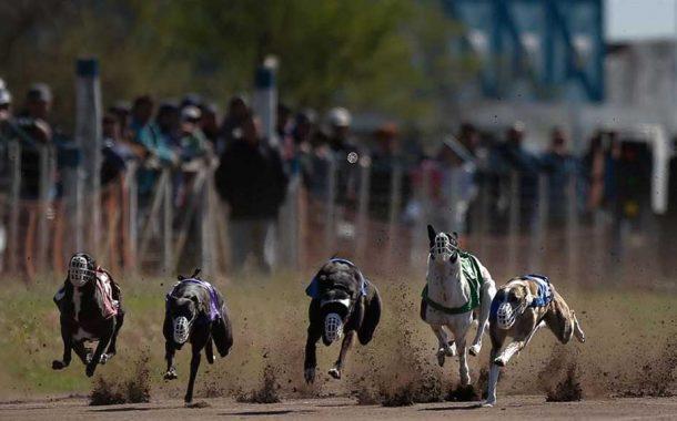 Promulgan ley que prohibe las carreras de galgos en el país