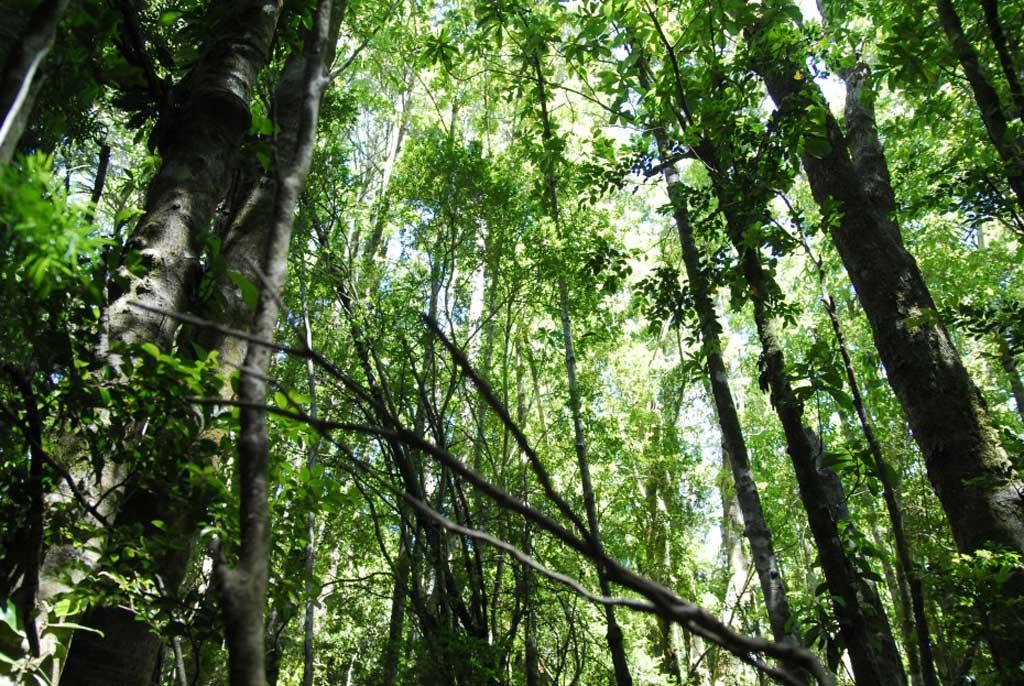 Sancionaron la ley de bosques nativos de la Provincia