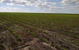 Comenzó la siembra de soja de segunda