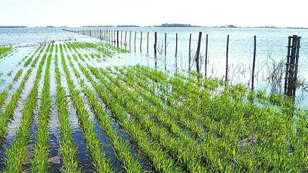 Soja: complicada por el agua en norte BA y sur de Córdoba y SF
