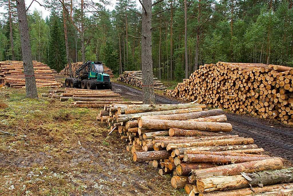 Disminuyó 16% la deforestación