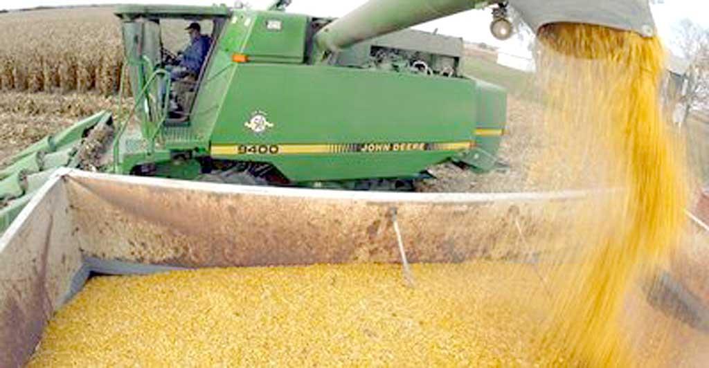 Avanza la cosecha de maíz en la zona núcleo