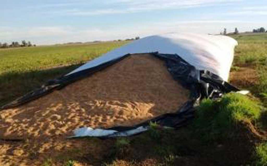 Inédito robo de 400 toneladas de trigo en Henderson valuado en casi un millón de pesos
