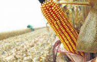 Se espera un aumento de la producción de etanol en Argentina
