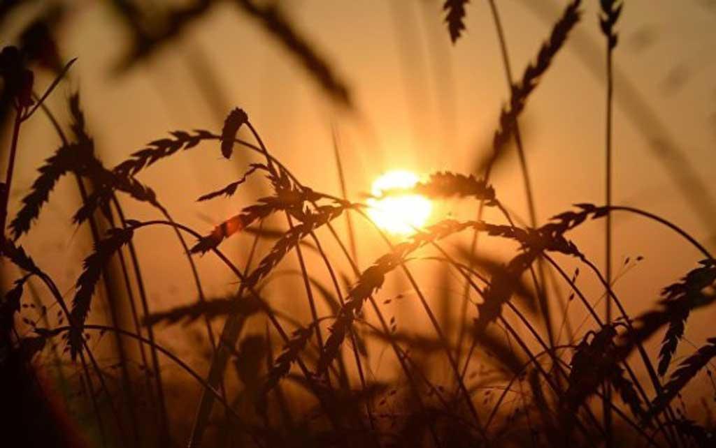 Será obligatorio inscribir en un registro fiscal nacional las tierras asignadas a la producción de granos