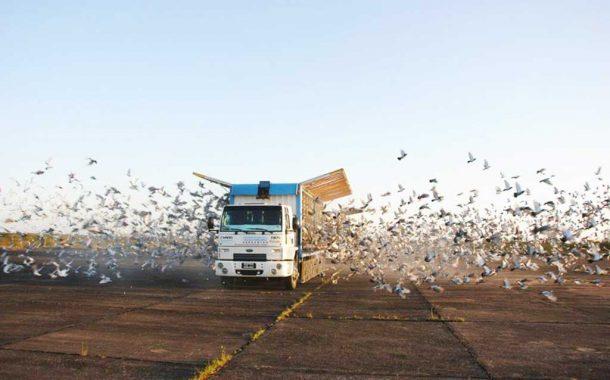 Bortel se impuso en la 7° fecha del social de palomas desde Corrientes