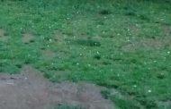 La lluvia llegó acompañada de granizo