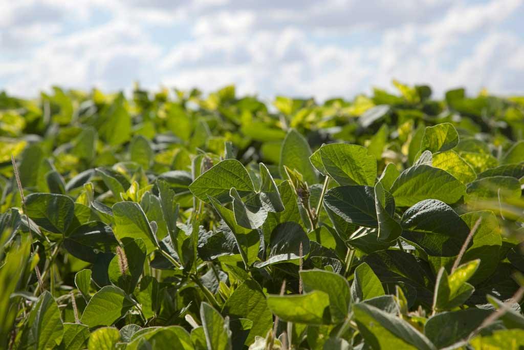 Buenos Aires es la provincia con mayor superficie sembrada de soja