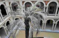 Lujazo en Casa Rosada: el gobierno gastó $235 mil en una palmera