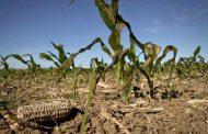 Extienden la emergencia agropecuaria por sequía en territorio bonaerense