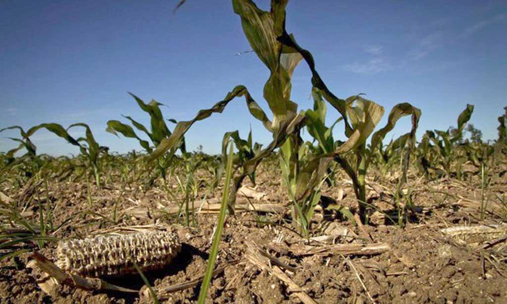 INTA advirtió sobre la difícil situación del ganado por la sequía