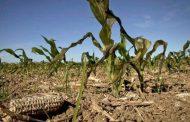 """Coninagro sobre la sequía: situación """"desesperante"""" en el norte bonaerense"""