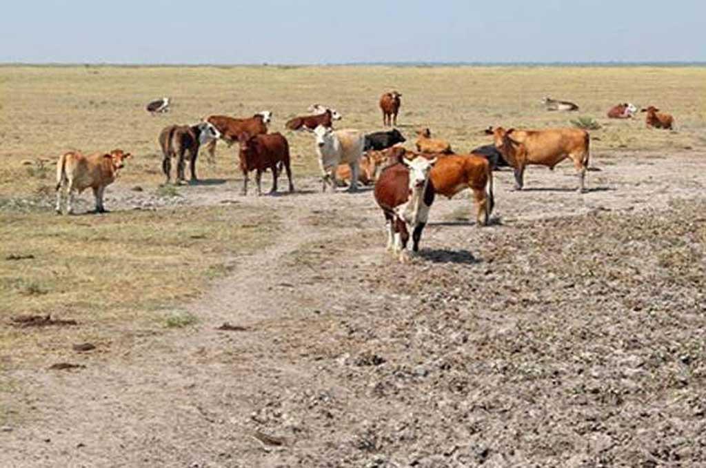 La sequía priva de 17.076 millones a la economía del interior bonaerense