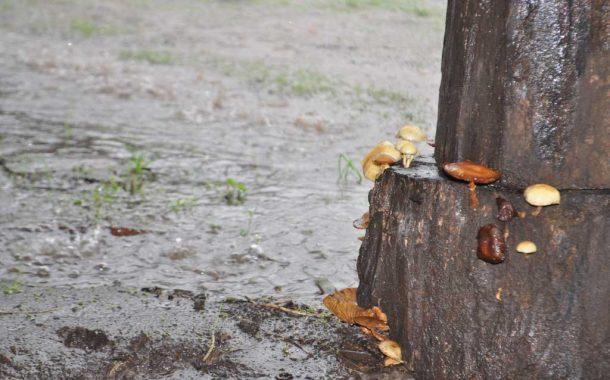 Tras las lluvias vuelve a bajar la temperatura