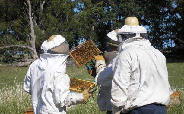 La Provincia convoca a productores apícolas a presentar proyectos