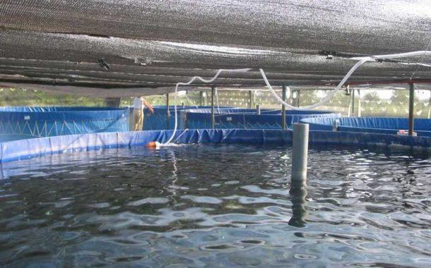 Incipiente interés por la acuicultura en Argentina