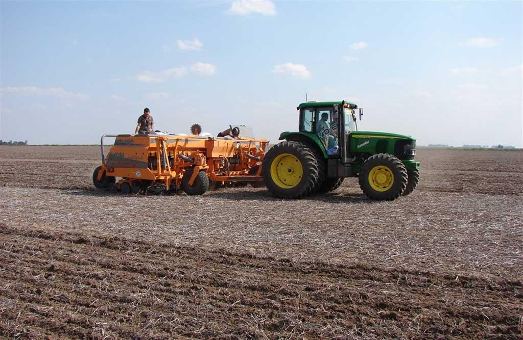 Buen avance de la siembra de trigo