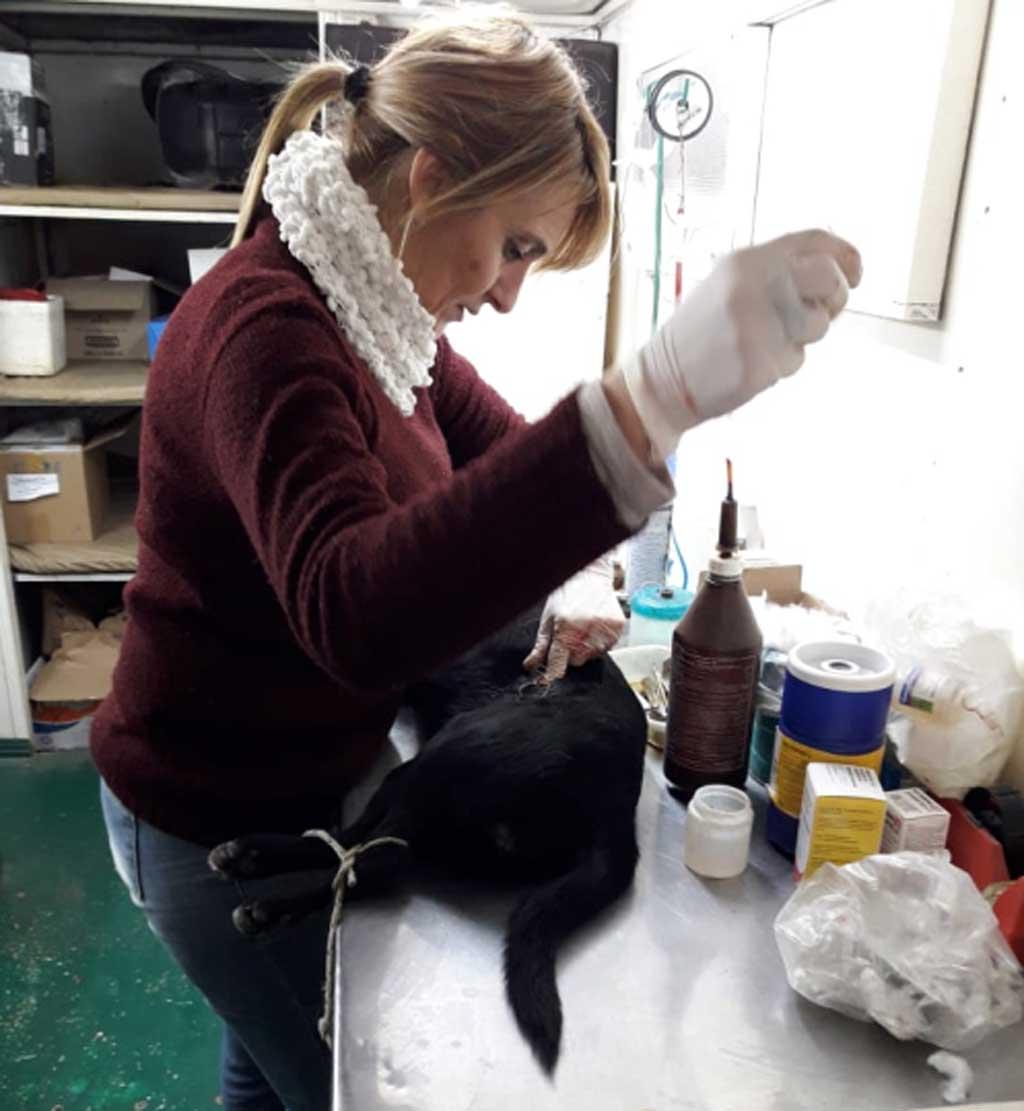 Castración de animales y vacunación antirrábica en barrio Santa Teresa